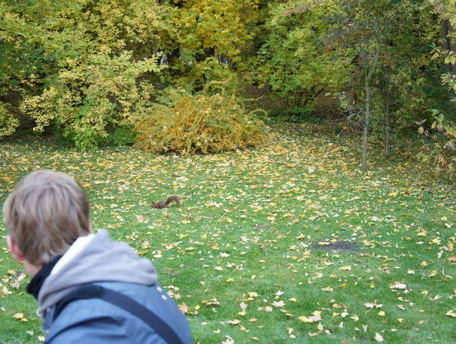 Eichhörnchen im Łazienki-Park, Warschau